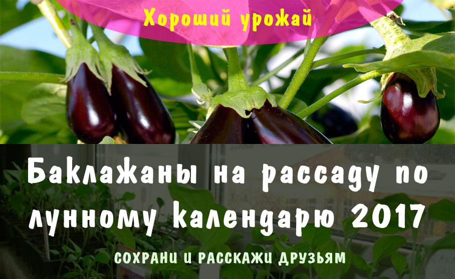 Когда сеять рассаду баклажан в сибири 24