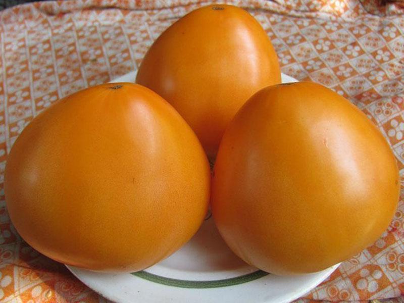Томат оранжевый гигант кто сажал 68