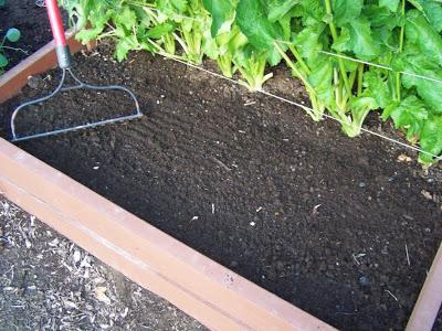 Выращивание лука - когда садить (сеять) лук на рассаду