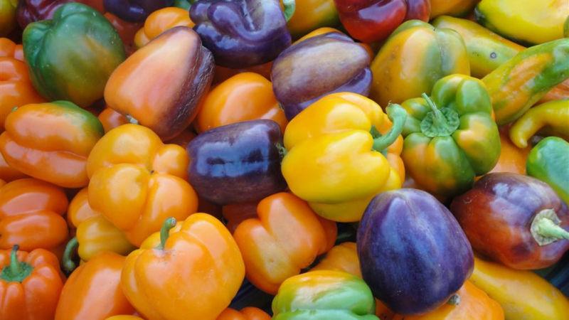 Когда высаживать перец в открытый грунт, в парник или теплицу