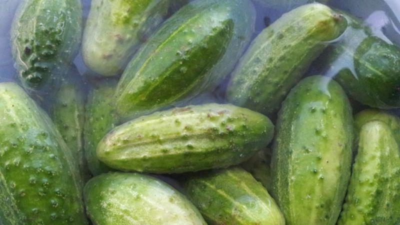 Малосольные огурцы рецепт хрустящие быстрого приготовления