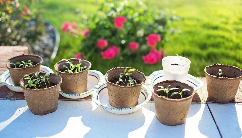 Как вырастить болгарский перец из семян в домашних условиях?