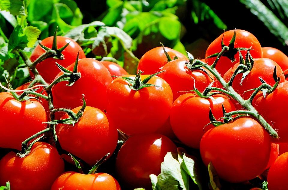 Сорта крупных мясистых и очень ранних томатов