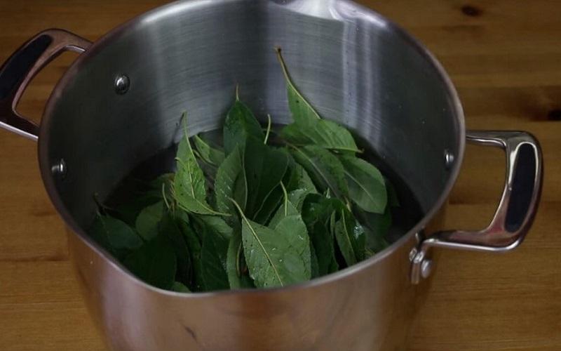приготовить отвар из вишневых листьев